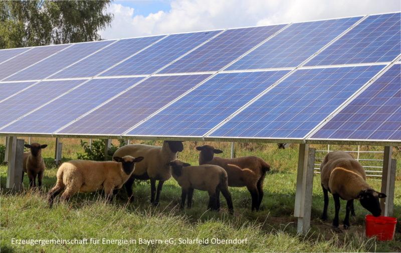 Bürger Solarpark Paunzhausen - Schafe